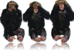 monyet-copy