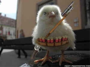 funny-wallpapers-chicken-war
